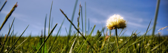 grassland with a single flower